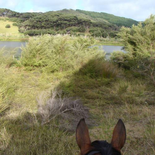 Discovering lakes through your horses ears.