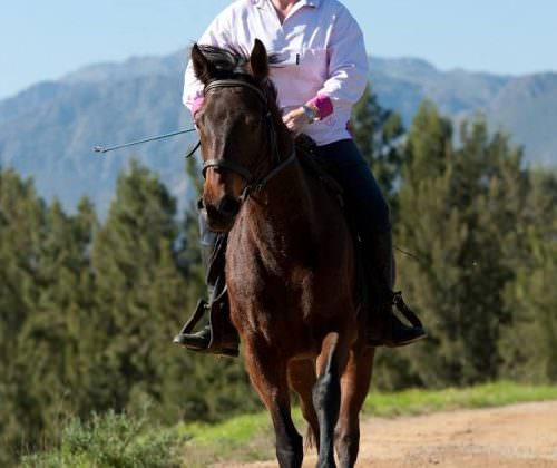 Cape Winelands horses