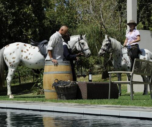 appaloosa at Cape Winelands