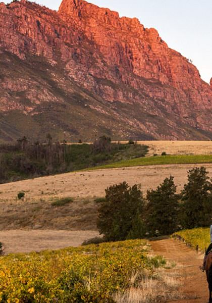 Riding through the Winelands of the Western Cape, South Africa