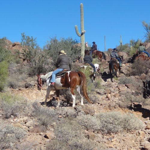 Trail riding through the cactus on a western ranch holiday with In The Saddle. Arizona