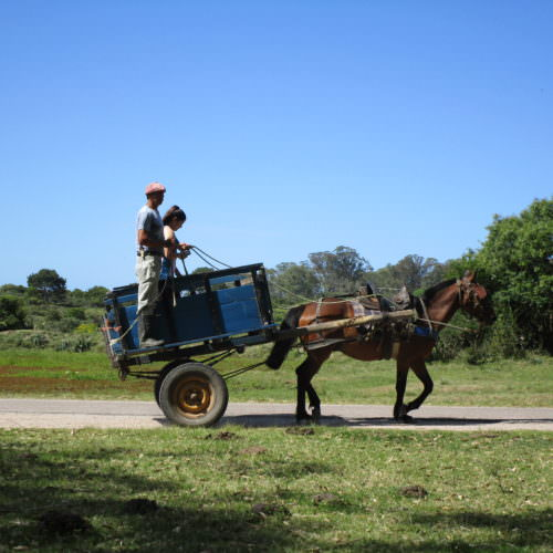 Beach riding holidays in Uruguay with In The Saddle. Horse and cart.