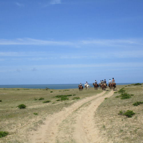 Beach riding holidays in Uruguay with In The Saddle. Horse by the ocean.