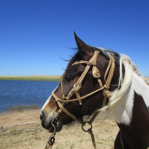 Uruguay beach. Beach riding holidays in Uruguay with In The Saddle. Horses.