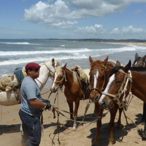 Beach riding holidays in Uruguay with In The Saddle. Group of horses.