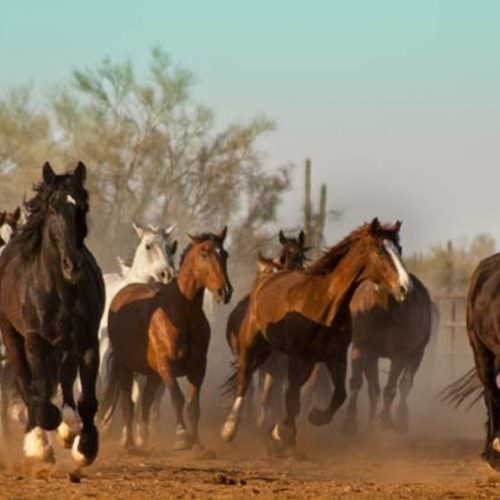 Herd of horses cantering in Arizona