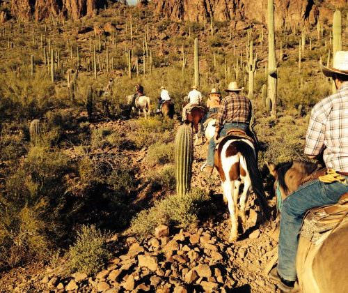 Guest - Gaynor. Horse riding in the desert, through cactus