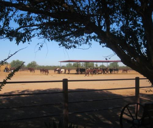 Guest - Vicky - horses grazing in Arizona