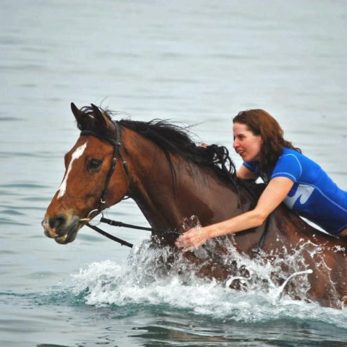 Trail riding holiday in Crete. Lassithi Plateau. Swimming with horse
