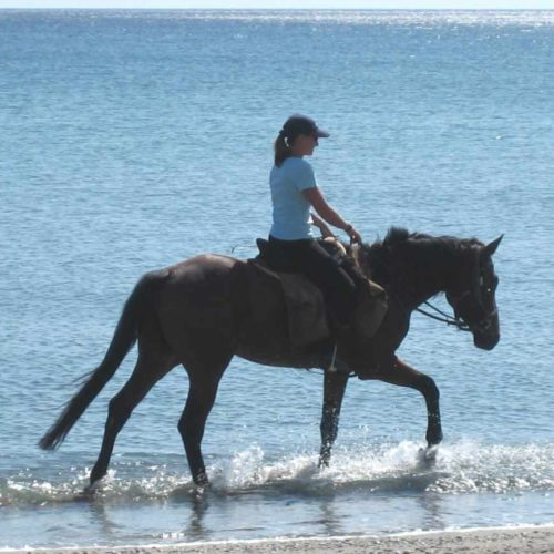 Trail riding holiday in Crete. Lassithi Plateau. Horses. Beach riding