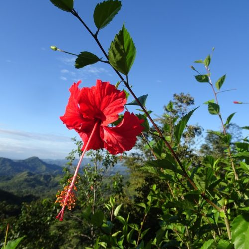 Wilderness ride in Costa Rica. Riding Holidays with In The Saddle. Rainforest flowers.