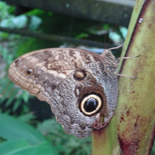 Wilderness ride in Costa Rica. Riding Holidays with In The Saddle. Rainforest butterfly