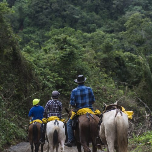 Wilderness ride in Costa Rica. Riding Holidays with In The Saddle. Horses and riders in rainforest.