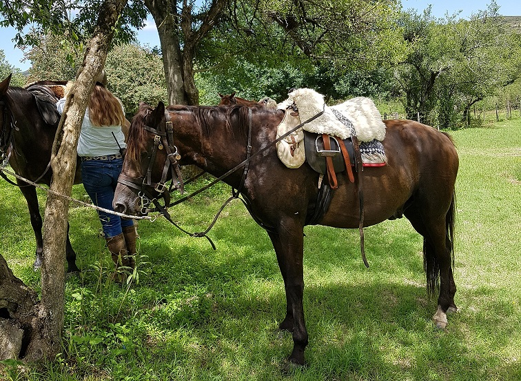 riding holidays in Argentina, Personal Peace at Estancia Los Potreros, In The Saddle