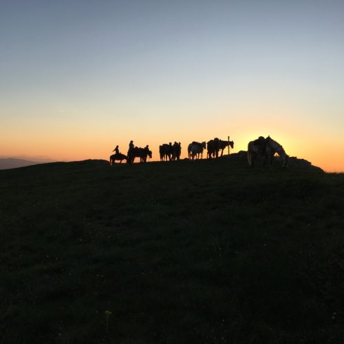 sunrise sunset in macedonia horses silhouette