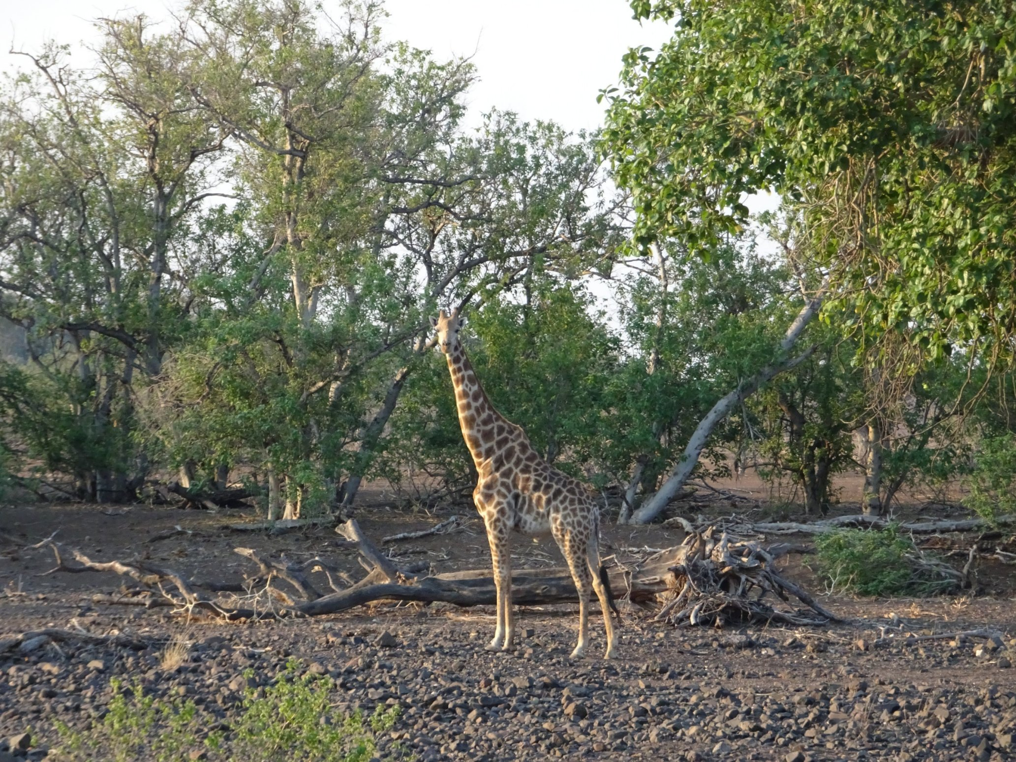 Tuli Trail Safari, Kicking up dust in the African bush., In The Saddle, In The Saddle