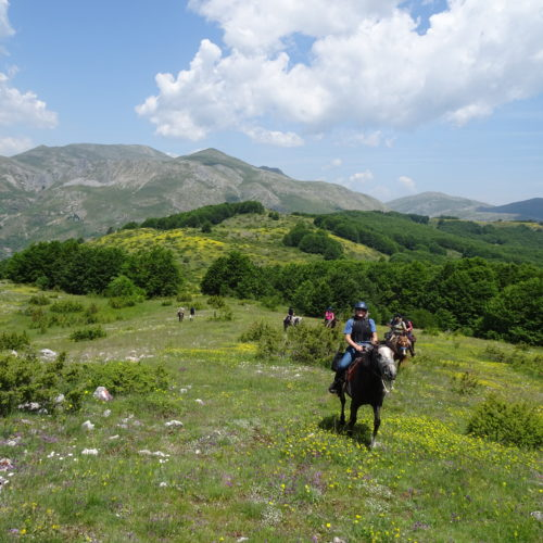 In The Saddle Riding Holidays. North Macedonia. Horses on the Trail