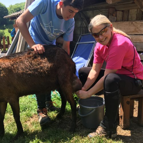 milking goats in Macedonia