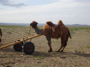 Mongolia, 8 things to know about Mongolia before you go, In The Saddle