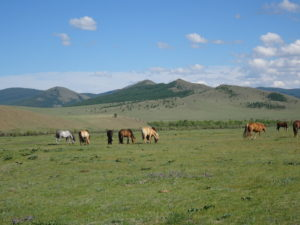 Mongolia, 8 things to know about Mongolia before you go, In The Saddle, In The Saddle
