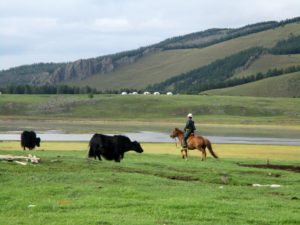 camping trail in mongolia, My Mongolian expedition by Steve Derne, In The Saddle