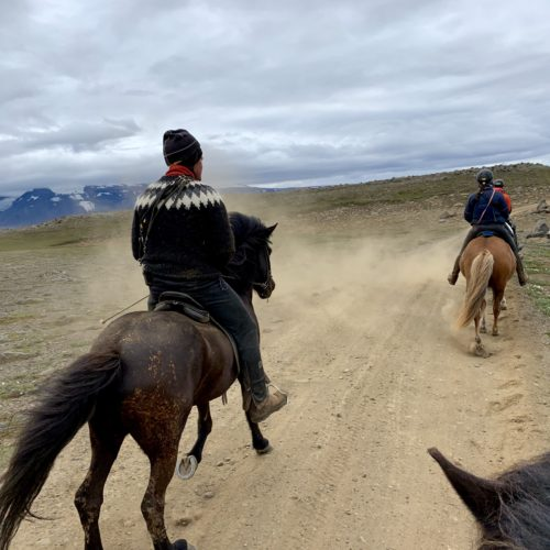 Iceland, Horse Riding, Trail Riding