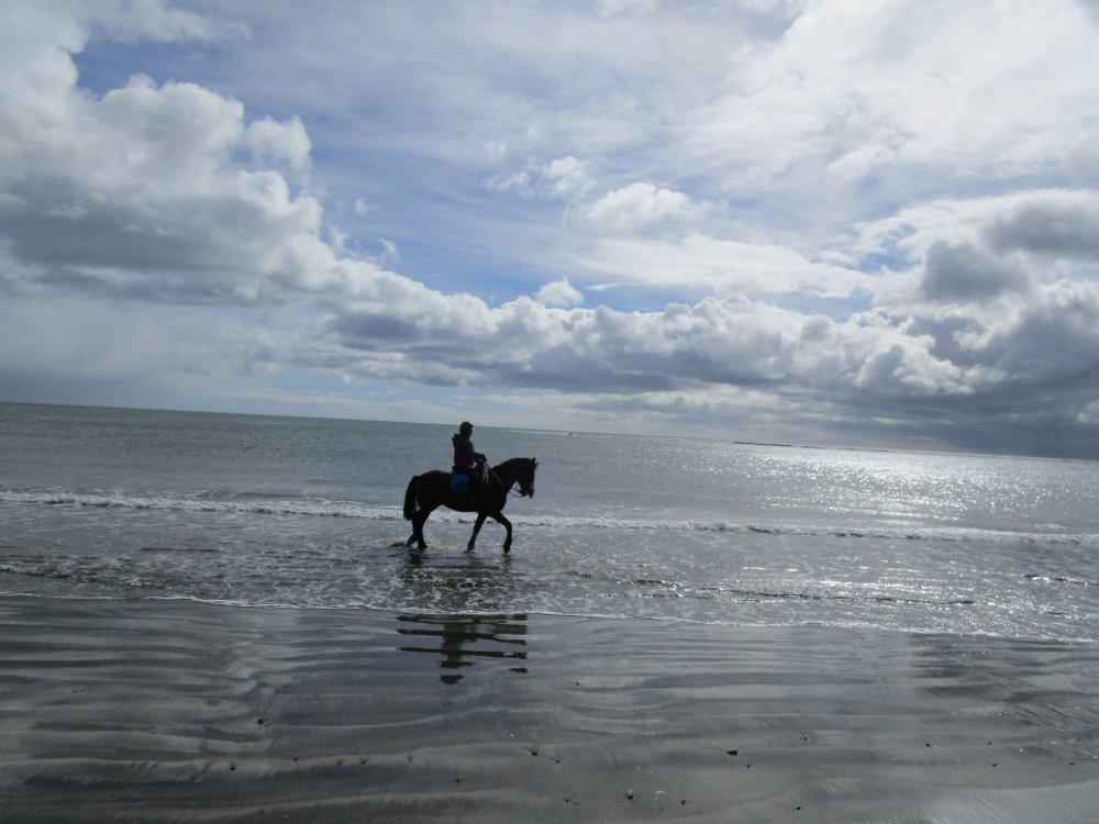In The Saddle Riding Holidays. Argentina, Fin del Mundo. Horse and Rider on the beach