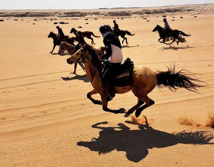 In The Saddle Riding Holidays. Namibia. Horses Galloping