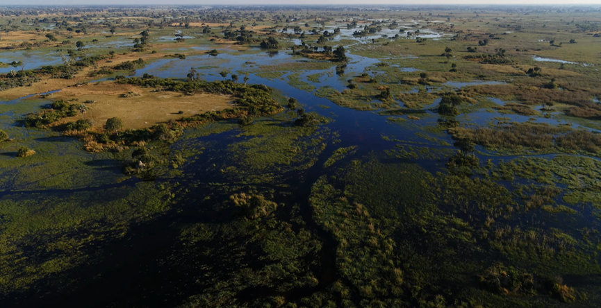 flood waters in the okavango delta