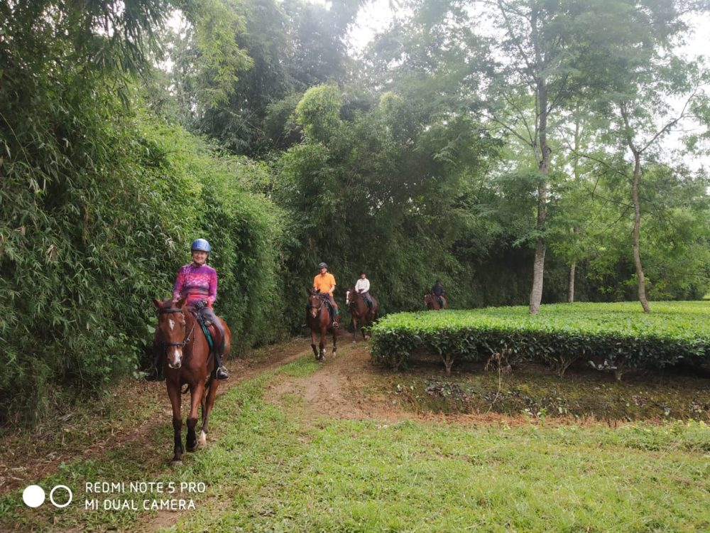 assam, I am looking forward to going back to Assam – by Mike Smith, In The Saddle