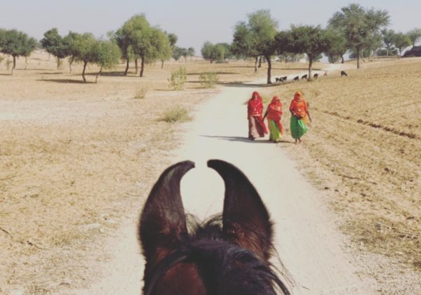 India, Choosing The Right Rajasthan Itinerary – Explore India!, In The Saddle