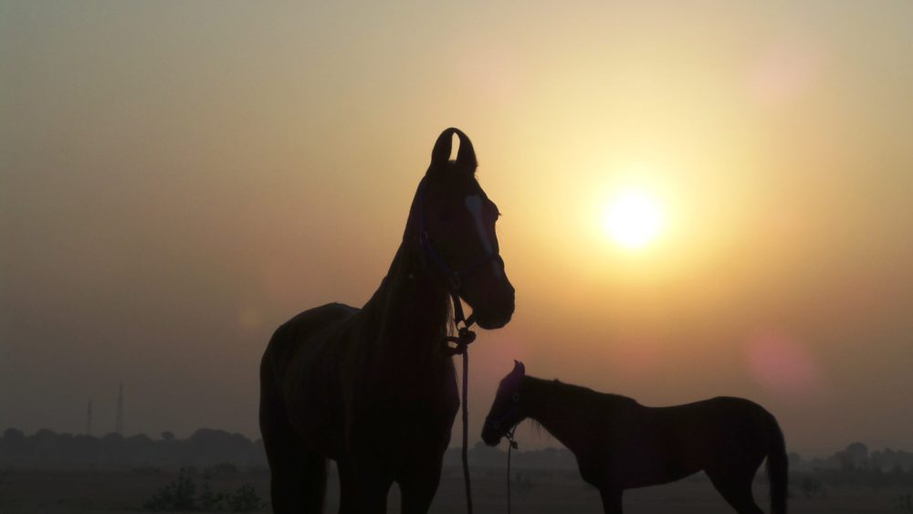 India, Choosing The Right Rajasthan Itinerary – Explore India!, In The Saddle, In The Saddle