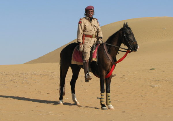 , Breeds from Around the World: Part Three – Marwari, In The Saddle