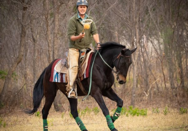 , Breeds from Around the World: Part One – Boerperd, In The Saddle
