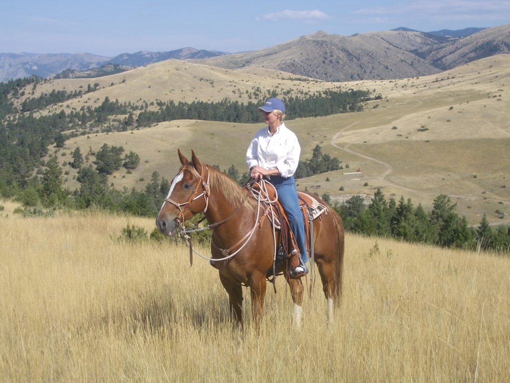 , Breeds from Around the World: Part Five – the Quarter Horse, In The Saddle