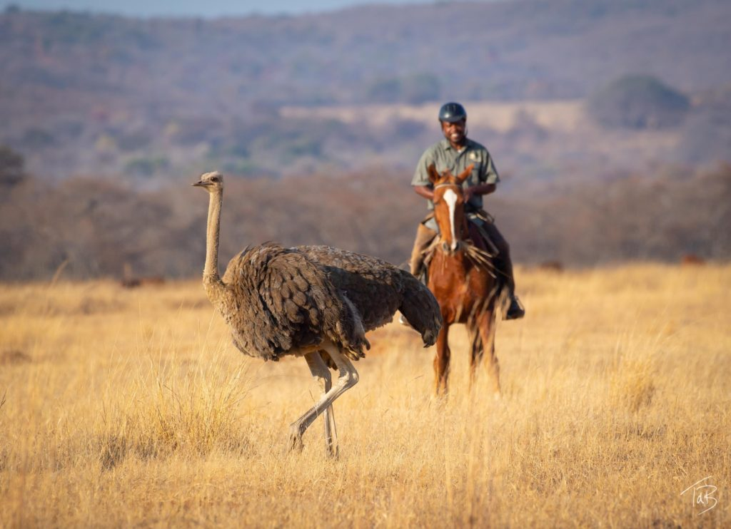 , February 2021 – Horizon's Feathered Friends, In The Saddle