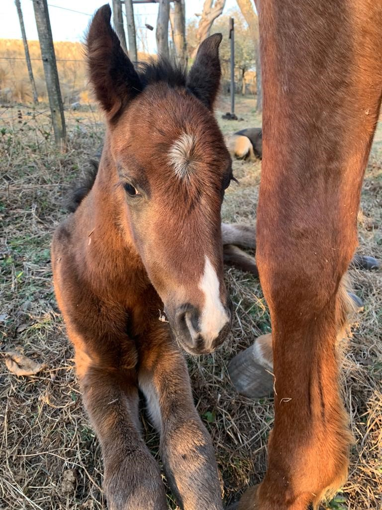 , Latest News from Los Potreros, In The Saddle