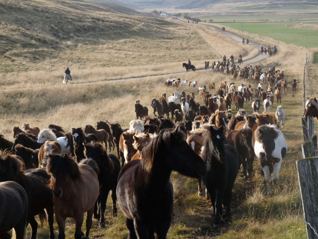, August 2021 – Horses in the Land of Fire and Ice, In The Saddle